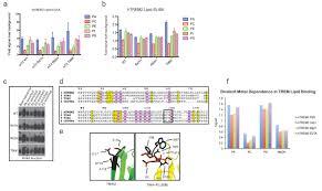 neurodegenerative disease mutations in trem2 reveal a functional