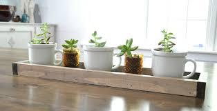 super simple succulent centerpiece