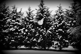 black and white christmas wallpaper christmas pictures black and white desktopwallpaper freedownload