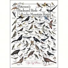 Nc Backyard Birds Bird Identification Wall Posters And Calendars Bird Id Wall