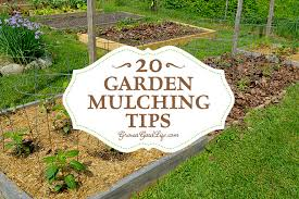 download what is the best garden mulch solidaria garden