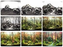 Aquascape Tree 18 Best Aquascape Diy Images On Pinterest Aquarium Ideas
