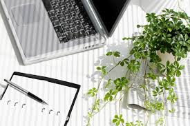 best plant for desk want to be more productive buy some desk plants