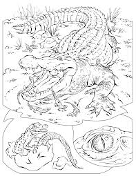 wildlife coloring pages olegandreev me