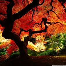 pretty wallpapers for desktop beatiful wallpapers group 82