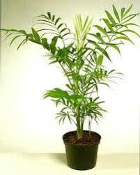 plantes dans la chambre les plantes dépolluantes pour la chambre de bébé conseils en