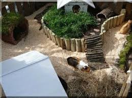 Rabbit And Guinea Pig Hutches Best 25 Guinea Pig Run Ideas On Pinterest Guinea Conakry Cages