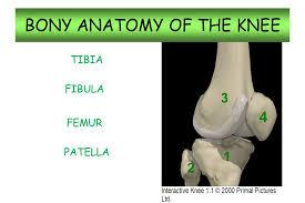 Knee Bony Anatomy Knee Anatomy Rhs Sports Medicine Ppt Video Online Download