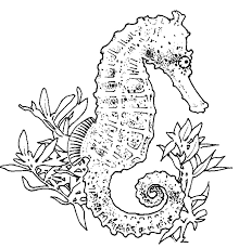 best seahorse coloring pages 28 for your line drawings with