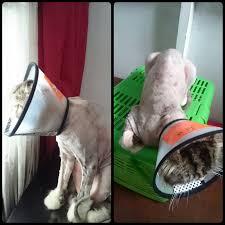 Hair Dryer Khusus Kucing berbagi pengalaman cara merawat dan menyayangi anak serta cara