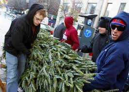 soho trees fir the low low price of 900 ny daily news