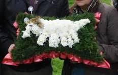Dog Flower Arrangement 5 Legged Dog Floral Arrangement Upsets Family Boing Boing