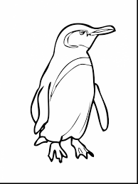 impressive galapagos penguin coloring page with penguin coloring