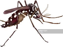 spider transparent background illustration of a yellow fever mosquito which can spread denger