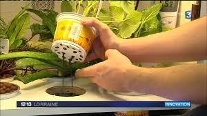 pousse pousse cuisine le pousse légume jardin dans la cuisine