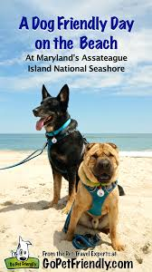 bring your dog to the beach find new jersey pet friendly rentals