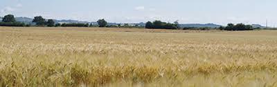 chambre d agriculture 73 tout savoir sur les baux ruraux chambre d agriculture de l ariege