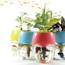 How Do Self Watering Planters Work Amazon Com Back To The Roots Water Garden Amazon Launchpad