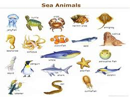 the sea clipart aquatic animal pencil and in color the sea