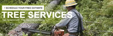 san antonio tree removal professionals tree removal company san