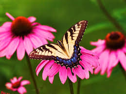 butterfly flower of the jungle symbiotic relationship of butterfly and flower