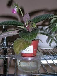 Diy Self Watering Herb Garden Best 25 Self Watering Ideas On Pinterest Self Watering Planter