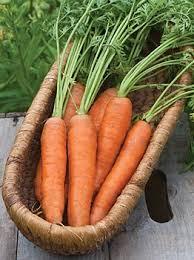 Freezing Root Vegetables - 244 best carrot u0026 other root vegetable varieties images on