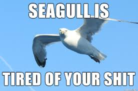 The Gallery For Gt Exhausted Mom Meme - tired of your shit seagull meme on imgur
