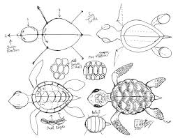 draw a sea turtle by diana huang on deviantart if the head is
