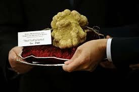italian white truffle the five most expensive truffles