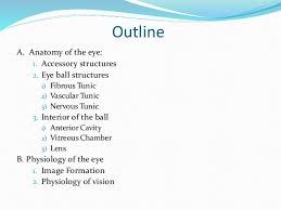 The Anatomy And Physiology Of The Eye Anatomy Physiology Outline The Anatomy And Physiology Of The Human