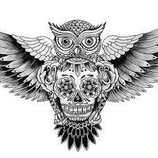 bilderesultat for owl skull owl