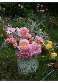 70 best roses images on pinterest beautiful flowers garden