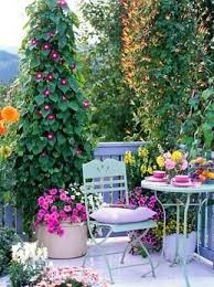 the 25 best balcony gardening ideas on pinterest balcony garden