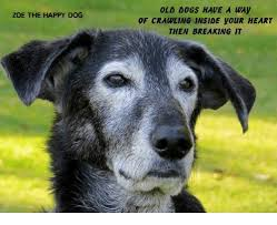 Happy Dog Meme - old dogs have a way of crawling inside your heart then breaking it