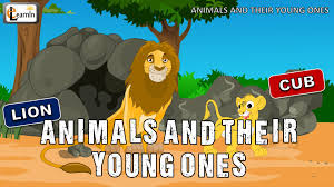 animals and their young ones the baby animals song mother and