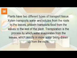 how is water transported in flowering plants youtube