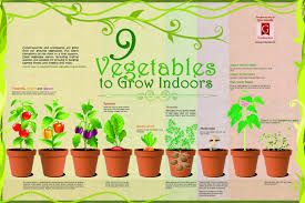 9 vegetables to grow indoors visual ly