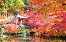 beautiful autumn in japan colored leaves which dye trees and a