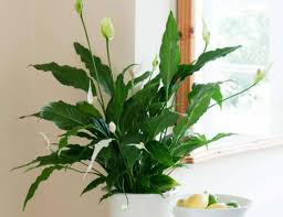 house plants that don t need light bathroom plants low light indoor that don t need sun beautiful for