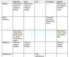 vocabulary worksheets u003e the animals u003e invertebrates science