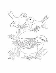 coloring pages birds coloring pages birds kids printables