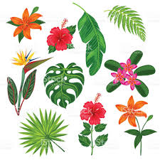 Tropical Plants Gardens Set Of Stylized Tropical Plants Leaves And Flowers Objects For