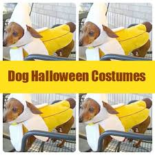 Halloween Costumes Miniature Dachshunds 130 Pup Images Long Haired Dachshund Animals