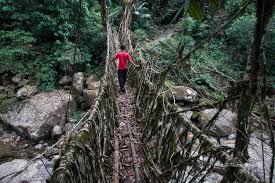 living bridges nabin baral