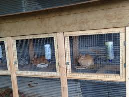 Rabbit Hutch Wood Rabbit Hutches Homemade Wood And Wire Youtube