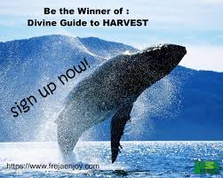 divine guide to harvest freja enjoy