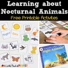 printable animal activities learning about nocturnal animals free printable activities