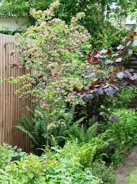 how to plant a tree in your garden hgtv