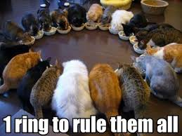 Cute Kitty Memes - 1 ring to rule them all cute kitty meme funny movie humor